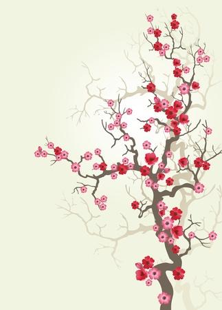 암술: 벚꽃 개화에 배경