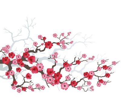 ramo di ciliegio: Sfondo di fioritura Sakura Vettoriali