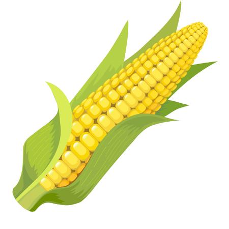 produits céréaliers: Image de maïs avec des feuilles vertes sur un fond blanc Illustration
