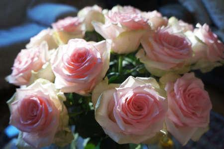 Natural Beautiful Pink Rose bouquet flowers background 版權商用圖片