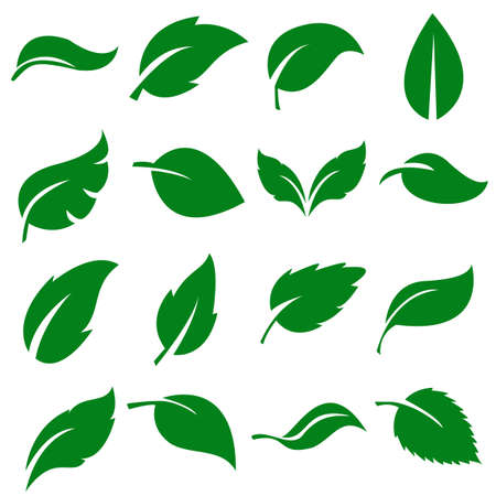 Green Leaves Collection. Set of leaf .Vector Illustration. EPS10