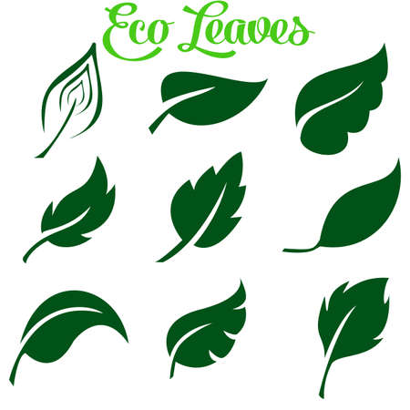 Green Leaves Collection. Vector Illustration. Set of leaf