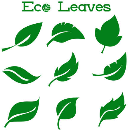 Green Leaves Collection. Vector Illustration. Set of leaf. Elements for eco and bio logos