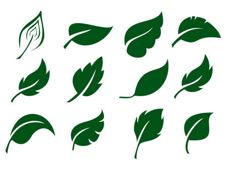 Leaves icon vector set isolated on white background. Various shapes of green leaves of trees and plants. Elements for eco and bio logos. Collection of green symbols isolated on a white background