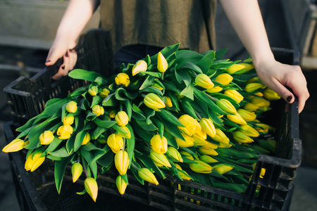 yelllow: black box  full by yelllow tulips. closeup Stock Photo