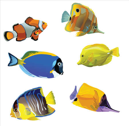 fondali marini: pesci d'acquario