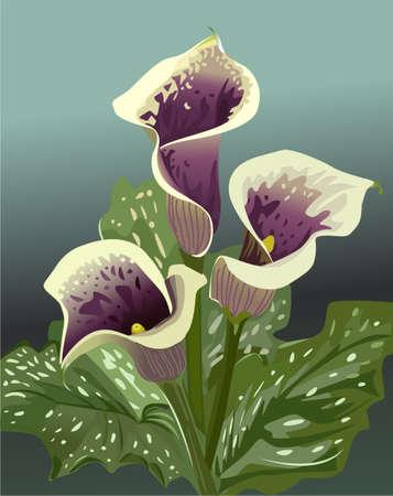bouquet of dark purple flowers Stock Vector - 10528383