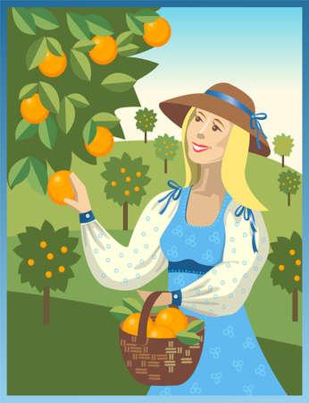 woman harvests of ripe oranges Illustration
