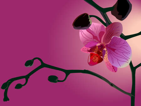 Gentle pink orchid Stock Vector - 10563898