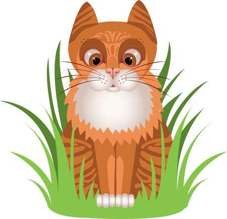 ludicrous: Ginger kitten in the grass