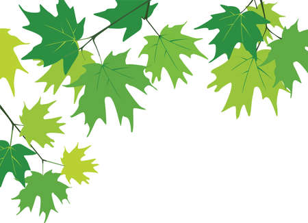 maple leaves Иллюстрация