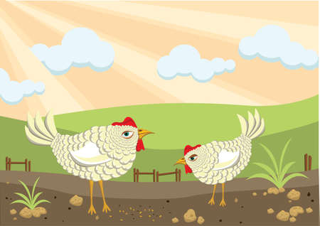 Chickens on the farm Illustration
