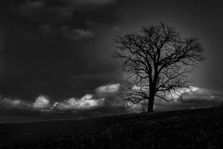 A lone tree on a hillside at dusk Banco de Imagens