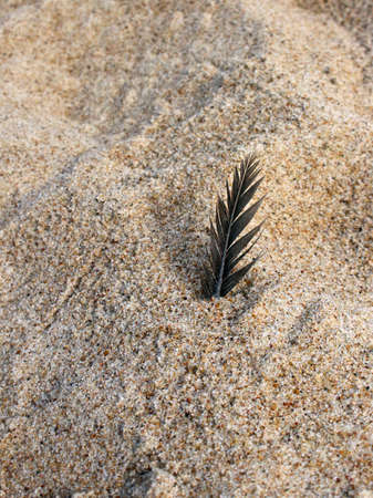Dark feather in the rough beach sand texture with a shadow Reklamní fotografie