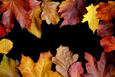 Autumn leaves border frame with black background and empty space