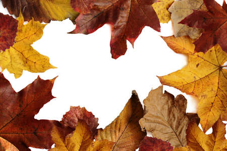 Autumn leaves border frame with white background and empty space