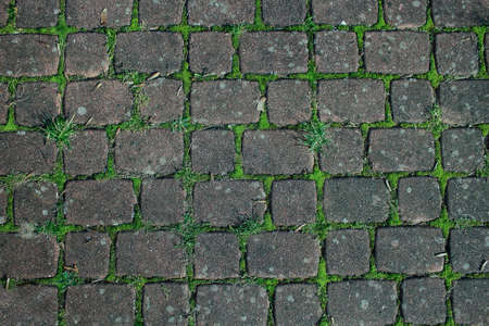 Pavement cray concrete tiles with green moss gaps background Stock Photo