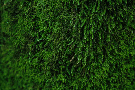Dark green moss textured background with bokeh effect