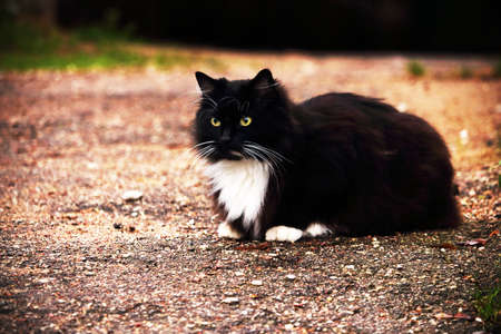 Black and white furry cat sitting on a sand road Stock Photo