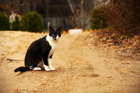 Black and white cat on countryside sand road in autumn