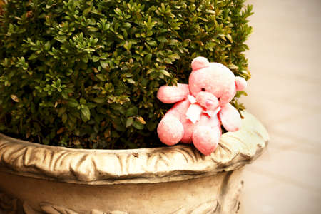 Small pink teddy bear left on a city street decorative plant vase with green bush