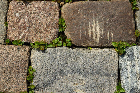 Red and grey stone bricks pavement with tiny green grass between bricks top view