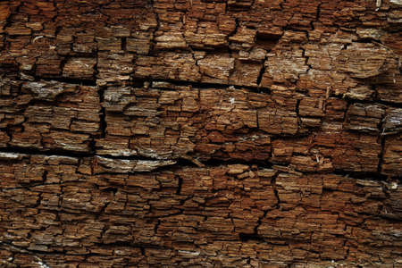 Dark brown tree bark texture horizontal trexture backdrop