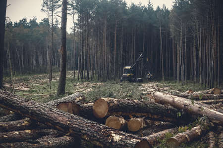Felling in the woods with fallen tree trunks and working combine harvester conceptual environment destruction