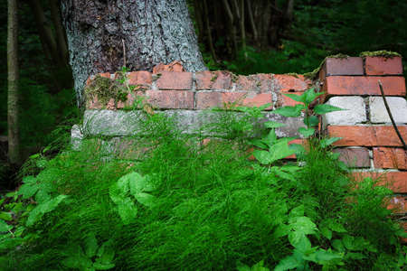 Red brick wall hidden in greenery in forest