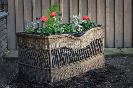 Handmade flower bed in woven wicker basket