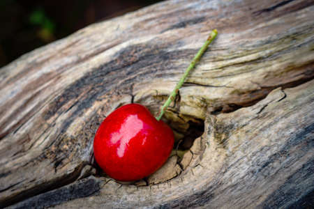 Red sweet cherry berry stuck in a hole in wood