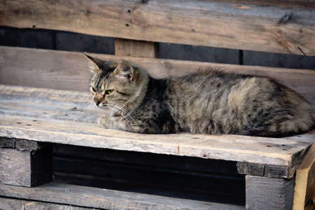 Brown cat lying on wooden plank bench outdoors