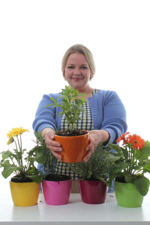 transplants: Women transplants spring flowers for mothers day gardening Stock Photo