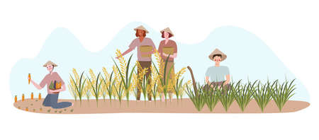 farmers planting on rice field fertilizer harvest with flat cartoon style
