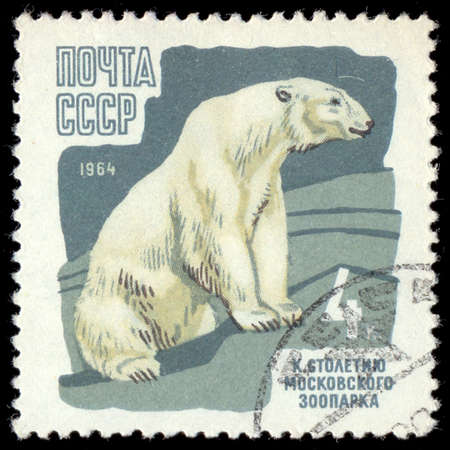 brute: USSR - CIRCA 1964: A Stamp printed in USSR shows image of a Polar Bear from the series \100th anniv. of the Moscow zoo\, circa 1964