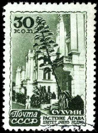 sukhumi: USSR - CIRCA 1947: A Stamp printed in the USSR shows the Abkhazia, Sukhumi, plant the Agave, circa 1947
