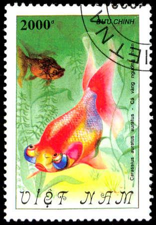 carassius auratus: VIETNAM - CIRCA 1982: A Stamp printed in VIETNAM shows a Carassius auratus auratus, series Goldfish ; ;, circa 1982