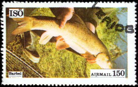 conspicillum: Sweden - CIRCA 1972: A stamp printed in Sweden showing Barbel, circa 1972