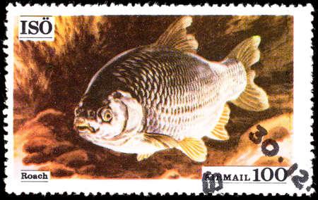 conspicillum: Sweden - CIRCA 1972: A stamp printed in Sweden showing Roach, circa 1972