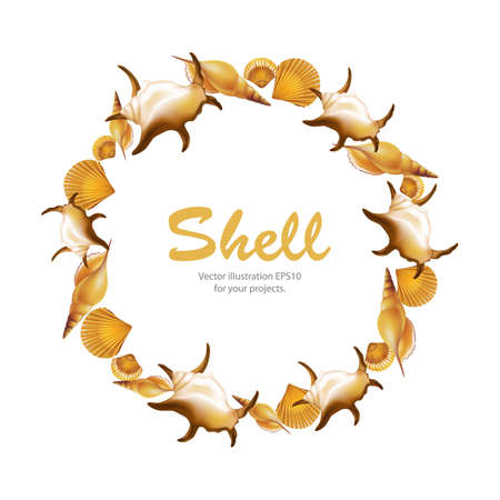 mollusc: Shells round frame on white background. Vector illustration.