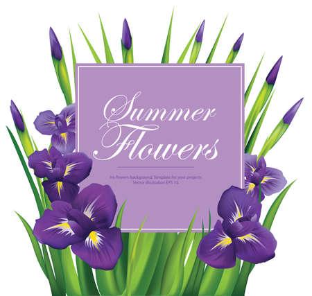temlate: Iris flowers frame on white background. Vector illustration. Illustration