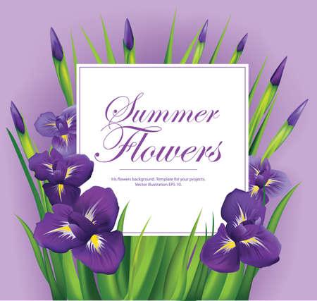 temlate: Iris flowers frame on violet background. Vector illustration. Illustration