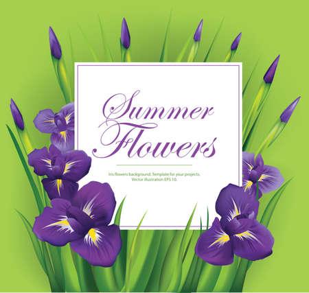 Iris flowers frame on green background. Vector illustration. Vettoriali