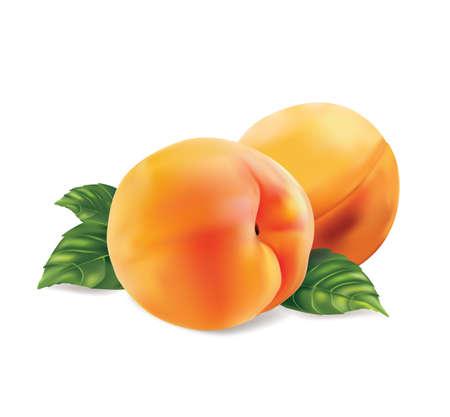 nectarine: Peach on white background. Isolated. Vector illustration.