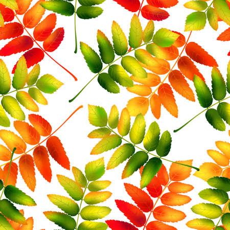 Bunte Herbst nahtlose Muster mit Rowan Blätter. Vektor-Illustration.