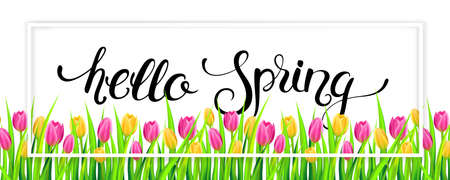 Hello spring banner with handwritten calligraphy lettering and tulips. Illustration.