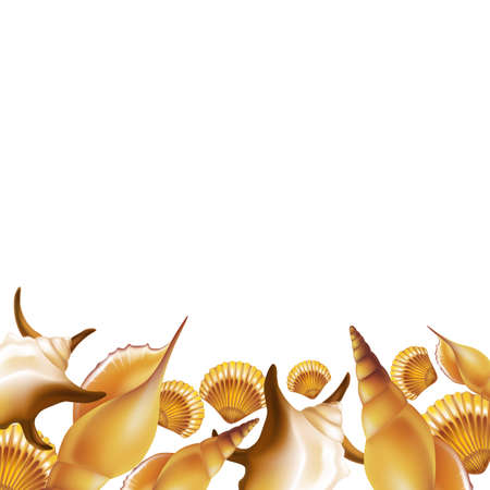 mollusc: Shells border background. Vector Illustration.