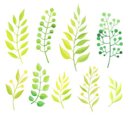 Green leaves set isolated on white background. - Vector