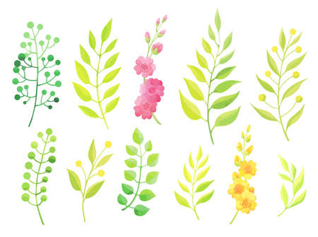 Green leaves and flowers set isolated on white background. - Vector Stock Illustratie