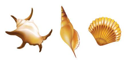 Shells on white background. Vector illustration.